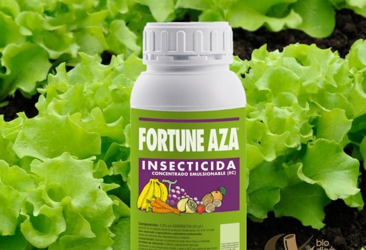 Fortune Aza